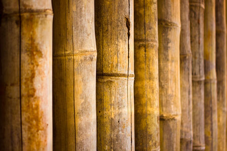 Bamboo fence and bamboo texture
