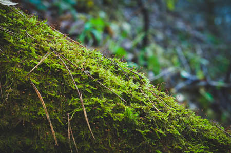 The tree trunk covered with moss.