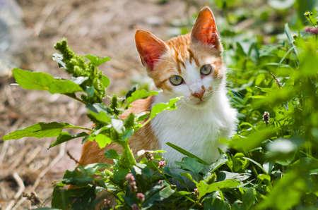 Ginger kitten in the green grass Stockfoto