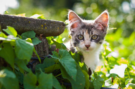 A cute gray kitten looks out of the leaves.