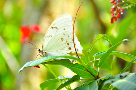 Blissfully peaceful butterfly