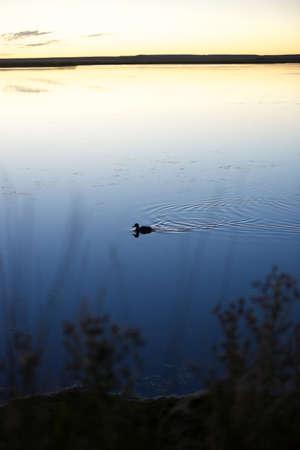 Lonely Swim Stock fotó
