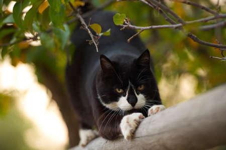 clawing: Artigliare Kitty