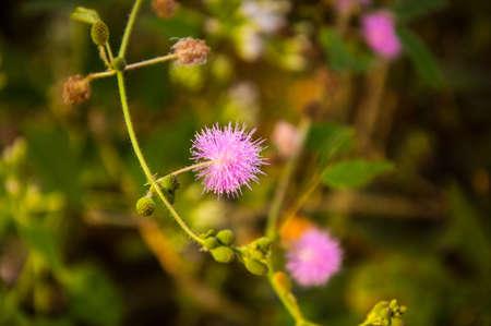 flores peque�as: Flores peque�as en el campo