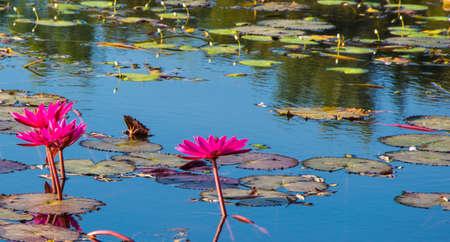 pus: red lotus