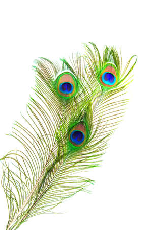 beautiful peacock feathers photo