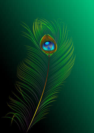 peacock feather illustration Vector