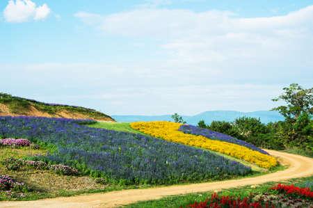 field of flower: field flower