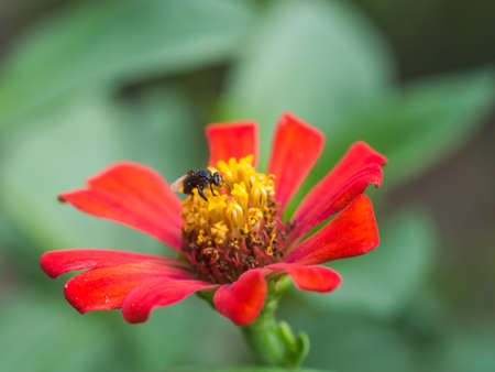 stamen wasp: insect on red flower