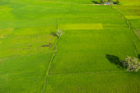 birdeye: rice field birdeye view take by paramotor and soft focus