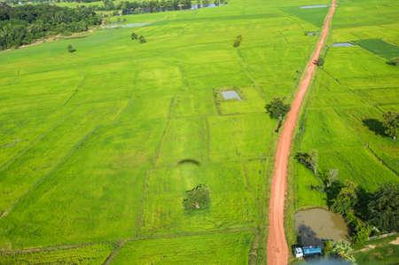 birdeye: rice field birdeye view take by paramotor and soft focus