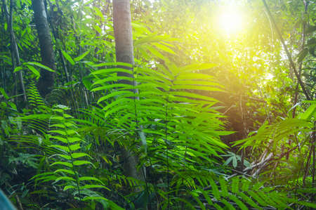 tropical tree: green plant in forest Stock Photo