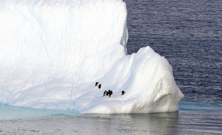 Antarctica on a Sunny day- Antarctic Peninsula - Penguins on Huge Icebergs and blue sky 写真素材