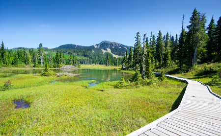 Alpine Trail and Meadow, Strathcona Provincial Park, Vancouver Island, British columbia, Canada Stok Fotoğraf