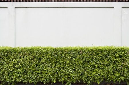 hedge plant: Wooden and concrete fence with Bush farming