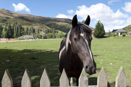 bluegrass: Black horse with green meadow over blue sky