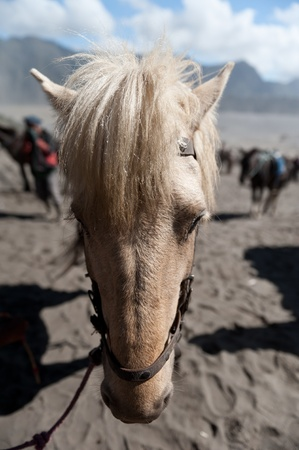 portrait of the horse at desert photo