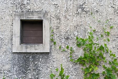 Green plant farming on concrete wall