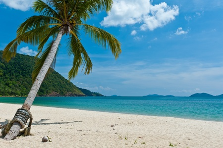 tilted: Koh Chang beach with tilted coconut tree, Thailand
