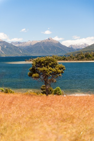 Summer landscape with lonely tree and lake (selective focus) photo