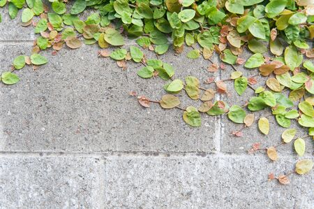 Green plant farming on concrete wall photo