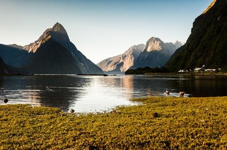 fiordland: Milford Sound, New Zealand Fiordland