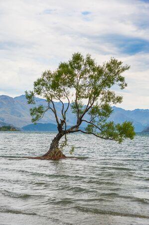 zen like: Single tree standing in the lake