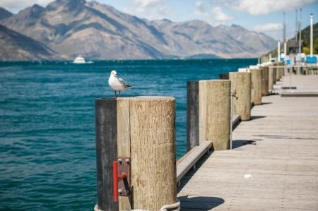 Seagull taking off at Wakatipu lake, New Zealand photo