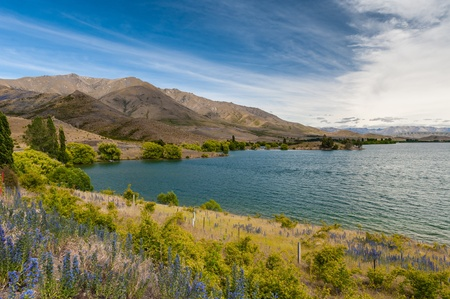 Landscape with lake and flowers, New Zealand photo