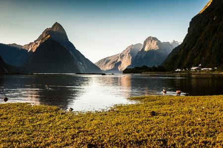 milford: Milford Sound, New Zealand Fiordland
