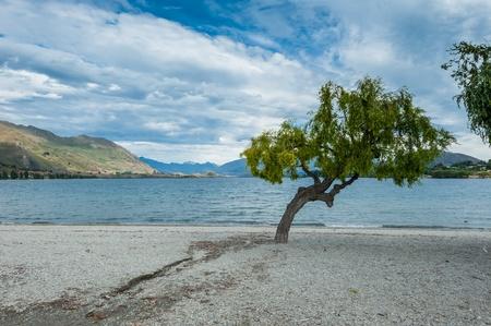 The Willows at Beautiful Wanaka lake , New Zealand photo