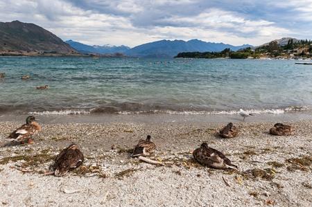bled: Beautiful Wanaka lake , New Zealand Stock Photo