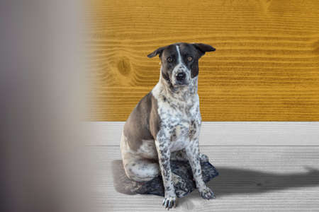 Dog sitting on the wooden room background.