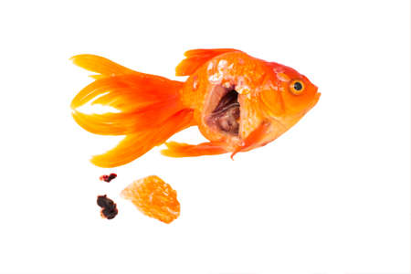 Anatomy Goldfish Your Dead Object Isolated On White Background