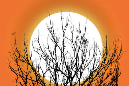 alone in the dark: The silhouette of a tree in a autumn with sunset backdrop. Clipping path. Stock Photo