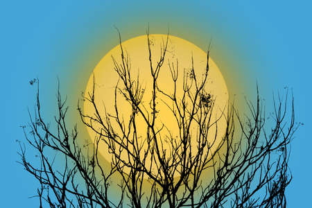 The silhouette of a tree in a autumn with the moon backdrop. Clipping path.