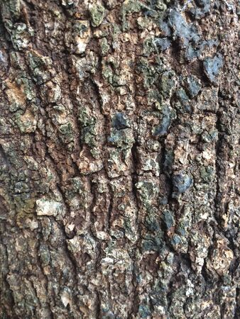 closeup: Texture made with a closeup of old tree