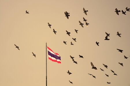 homing: Flock of pigeons on nightfall sky, Thailand flag on flagstaff Stock Photo