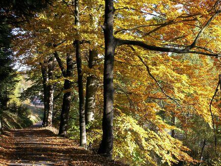 copse: Autumn