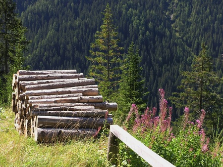 Holzstapel im Gebirge