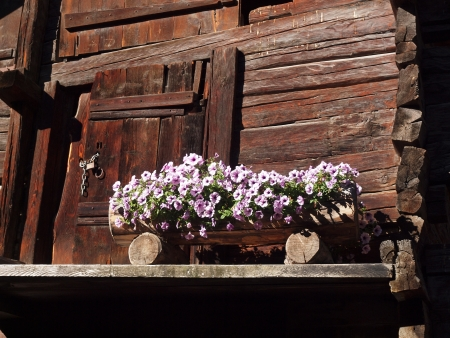 valais: Flowers in front of old log cabin Valais