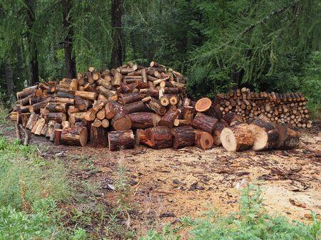 logs: sawn logs