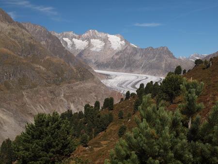 aletsch: Great Aletsch Glacier in Wallis