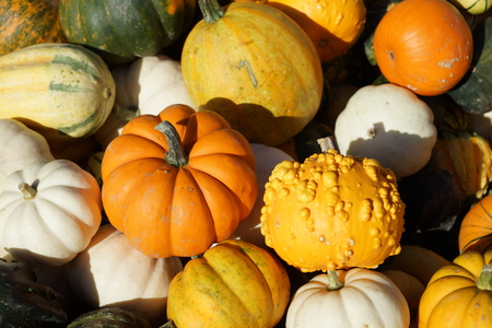 Ornamental squash on sale Stock Photo