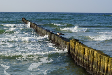 Groynes with birds Stock Photo