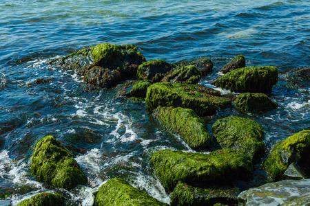 vagues de surf sur les rochers avec des algues
