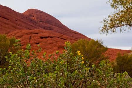 tjuta: Wlid nature near Ayers Rock (Uluru), and Olgas (Kata Tjuta), Australia