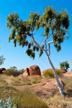 悪魔のビー玉、オーストラリアの近くの野生の自然