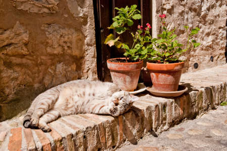 Cat relaxing on the ground and playing Stock Photo