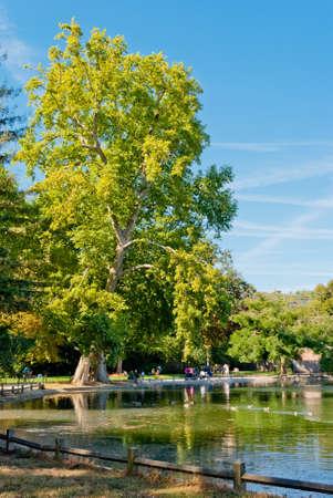 Bois de Boulogne, Paris Banque d'images